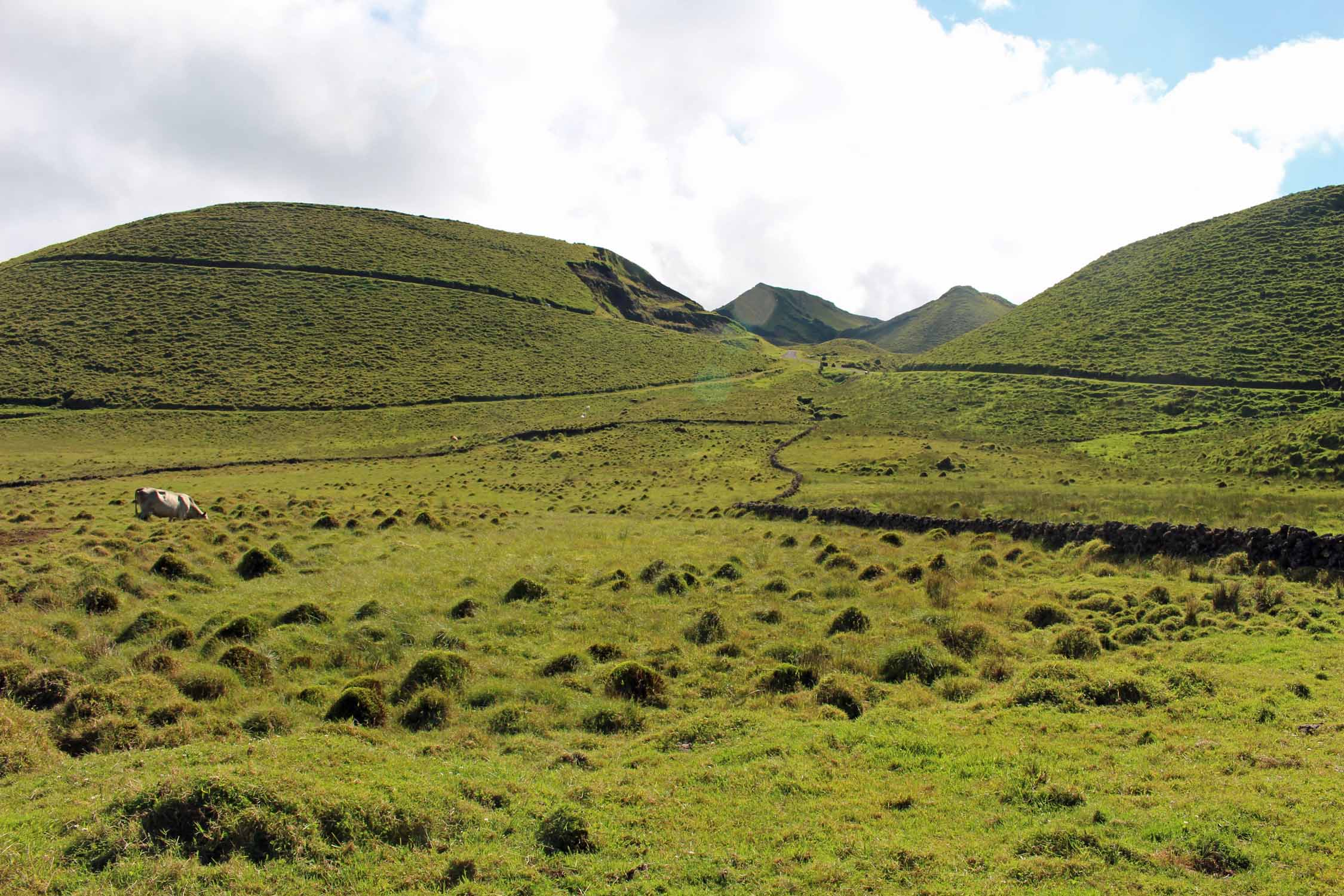 Landscape of the mountain in Pico Island, Azores