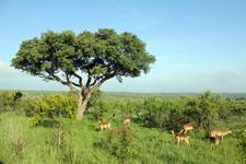 Parc de Kruger