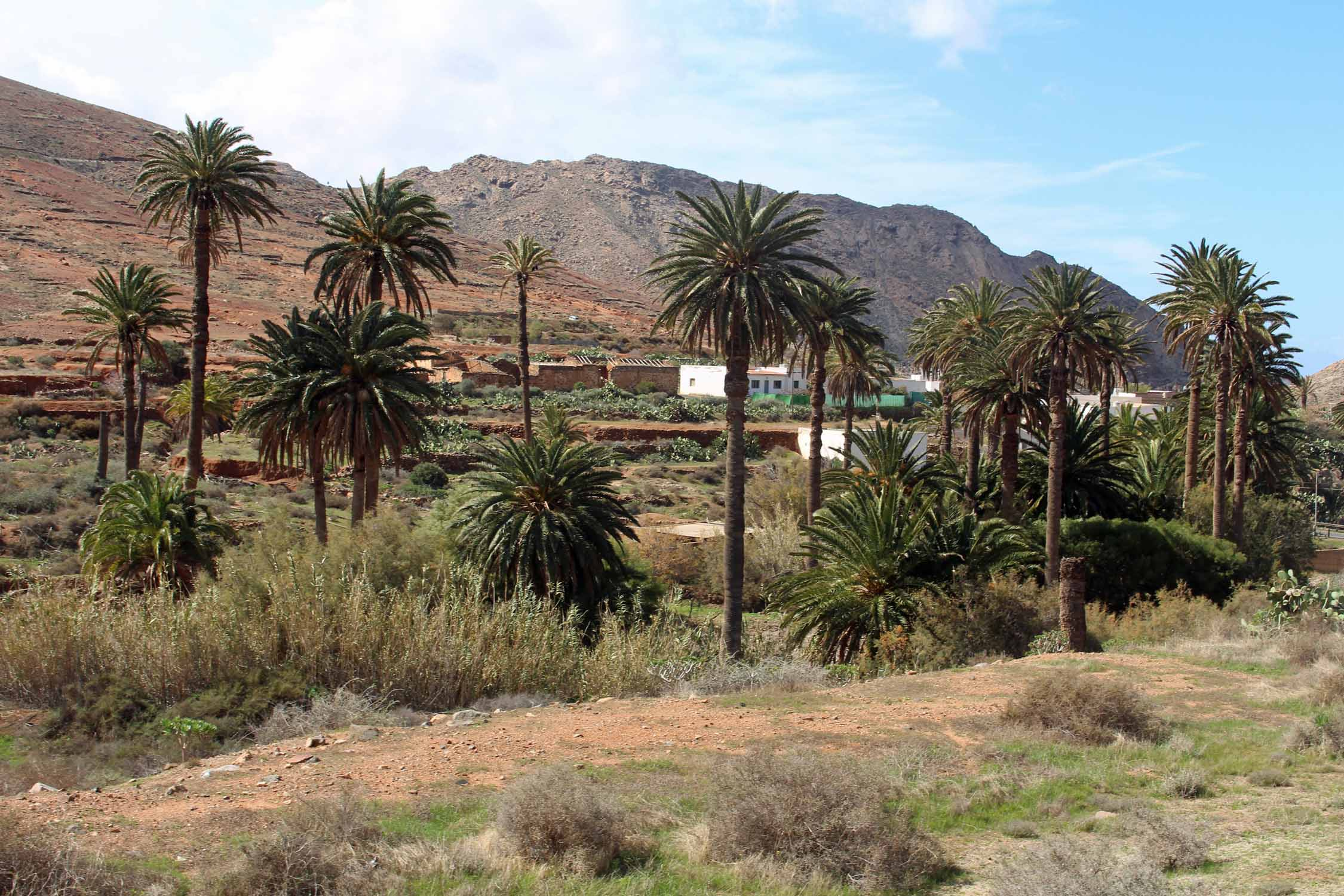 Vega de Rio Palmas