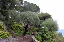 Les jardins de Saint-Martin