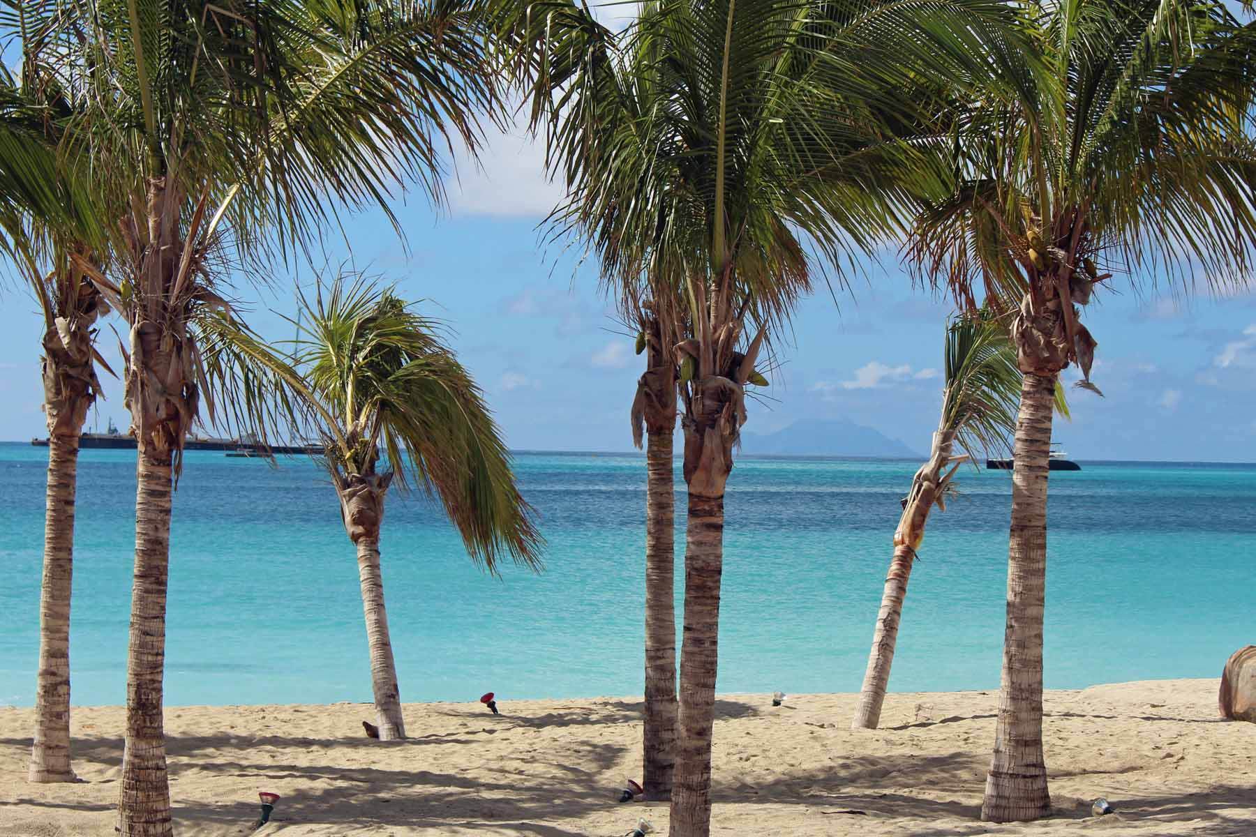 Saint-Martin island, Philispburg, beach, palm tree