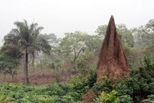 Termites' nest