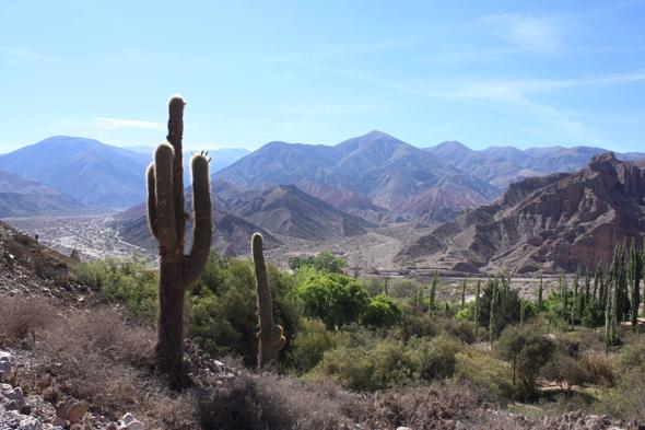 Argentina salta cactus for Cactus argentina
