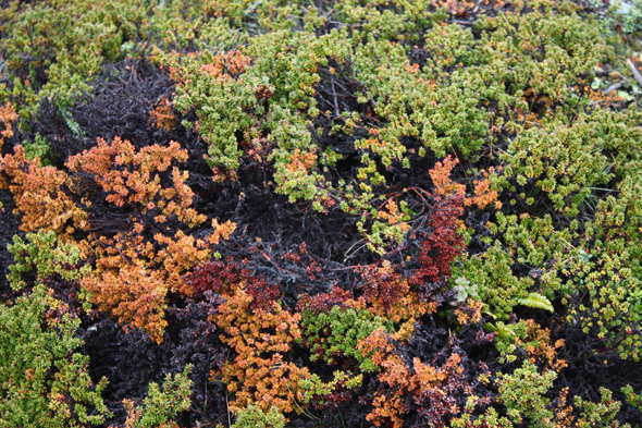 Lichens