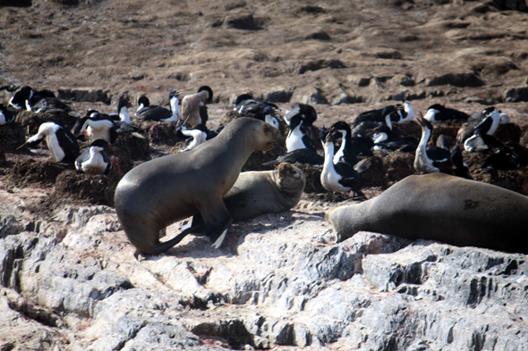 Ushuaia, sea-lions and landcape