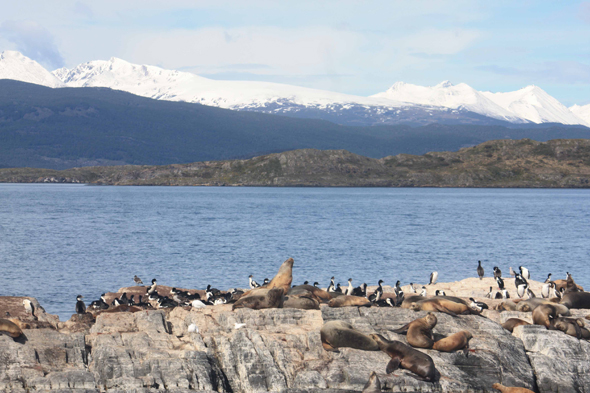 Beagle Channel, landscape