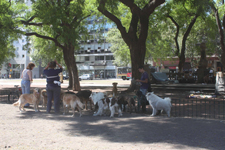 Dogs walker