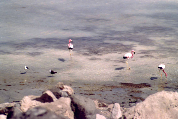 Laguna Blanca, flamants roses