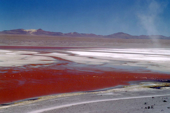 Laguna Colorada, red