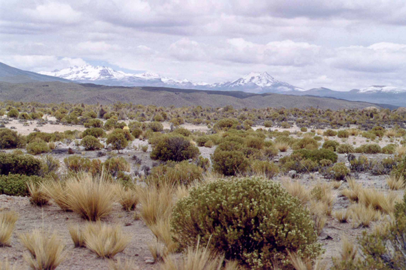 Parc national de Sajama