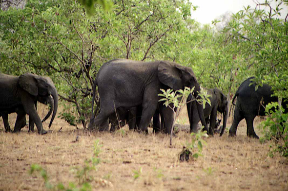 Burkina Faso, Elephants