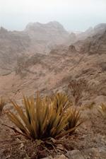 Valle de Mocho