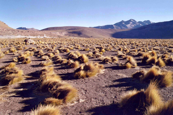 Chile, El Tatio, landscape