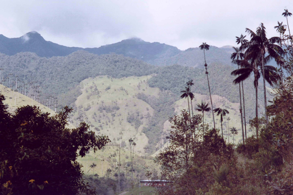 Colombia, Cocora Valley, wax palm