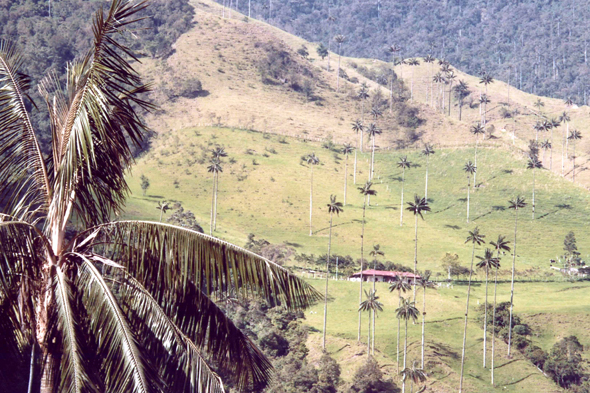 Cocora Valley, landscape
