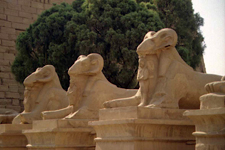 Karnak - Béliers