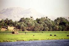 Fatirah