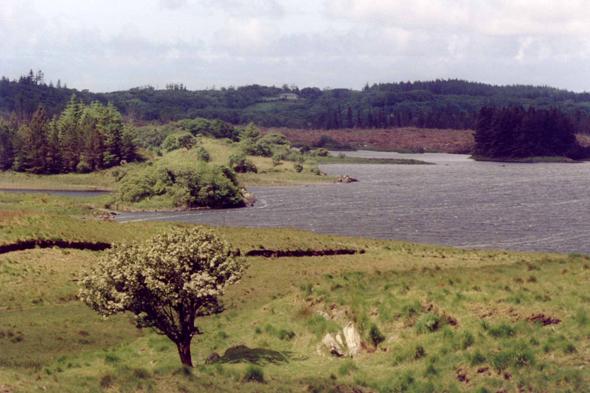 Derrylea