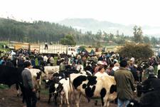 Mercado del ganado