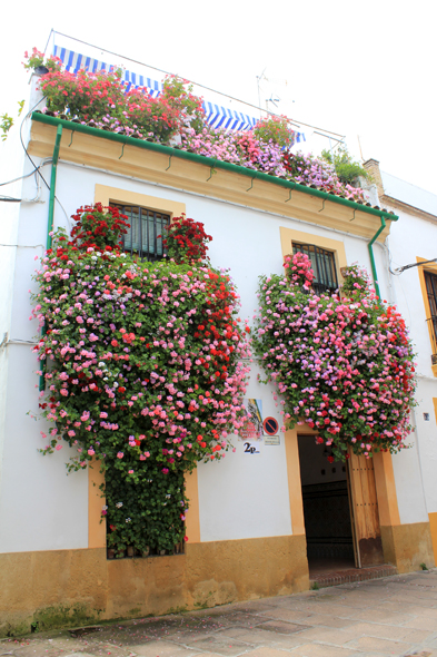 Cordoba, flower, balcony