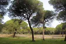 Parc de Doñana