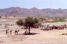 Désert Afar