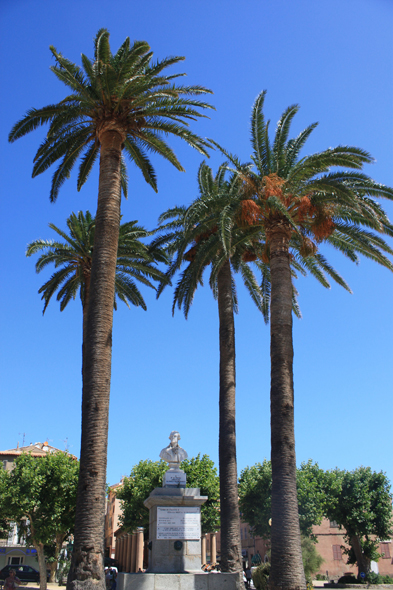 L'Ile Rousse, Palm tree