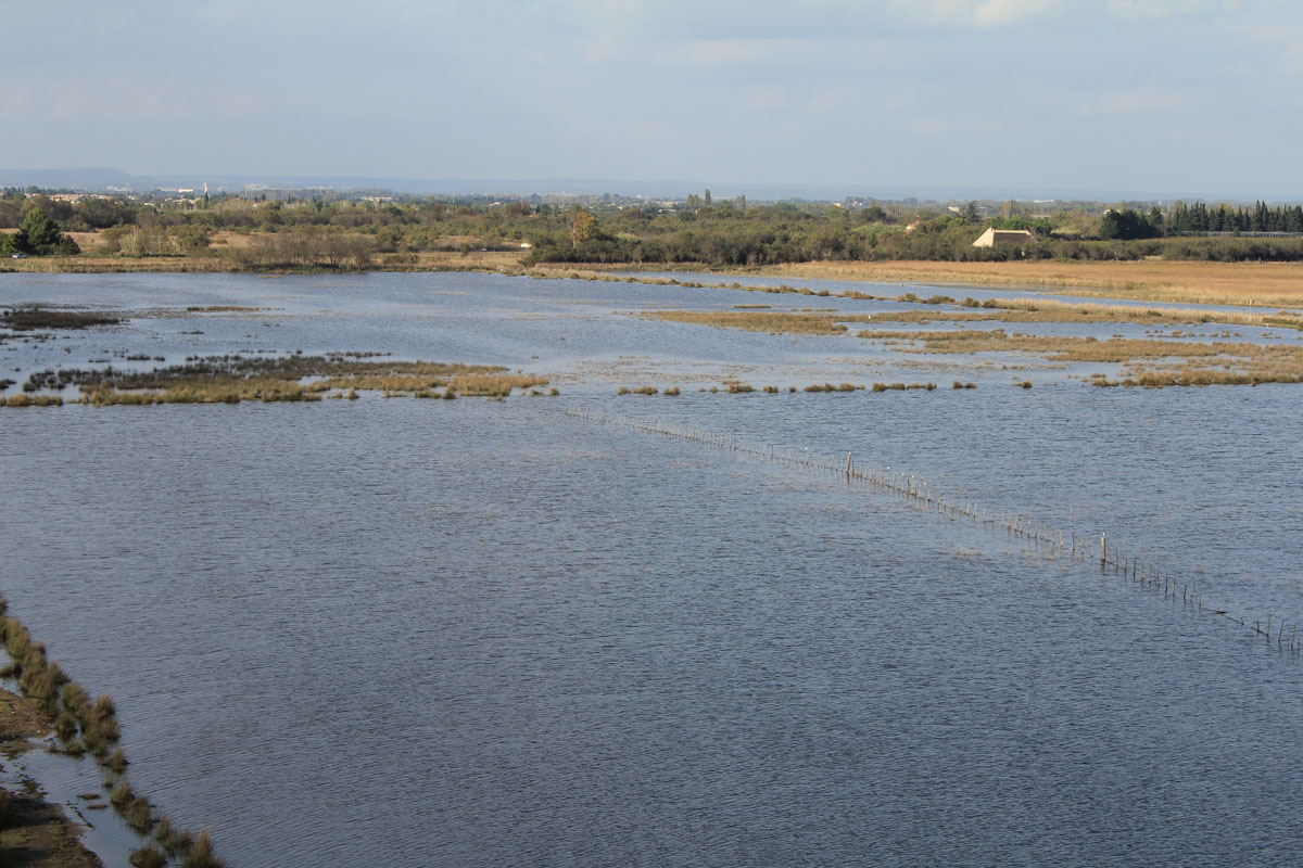 Aigues-Mortes, Camargue, view