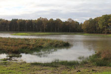 Pond of Sologne