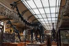 Paleontology Gallery