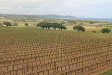 Vignoble de Pompelonne