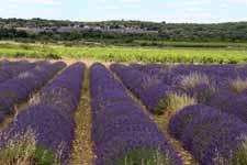 Plateau des Gras