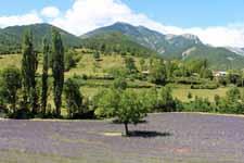 Vallée de Comane