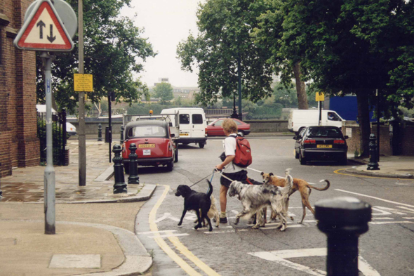 London, dogs