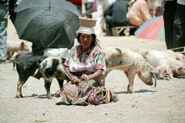 San Francisco de Alto, indian, pigs