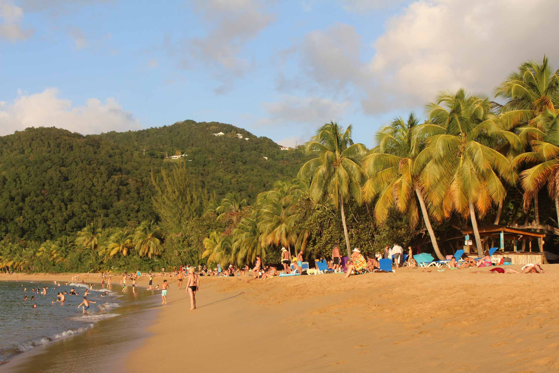 Deshaies, Grande-Anse beach, palm trees