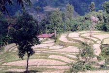 Sirwani