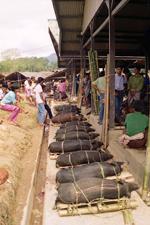 Cochons au marché de Rantepao
