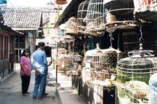 Mercado a las aves