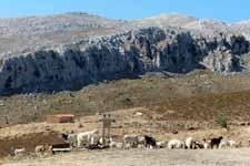 Mont'Albo