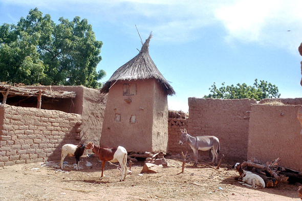 Dogon Country, Toro