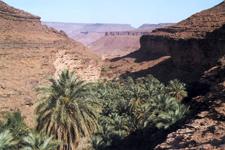 Terjit oasis