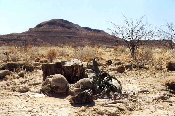 Damaraland, bosque petrificado