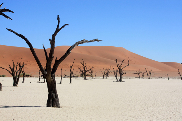 Deadvlei, dead trees