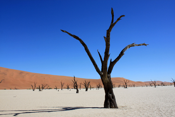 Deadvlei, trees dunes