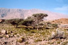 Jabal Bani Jabir